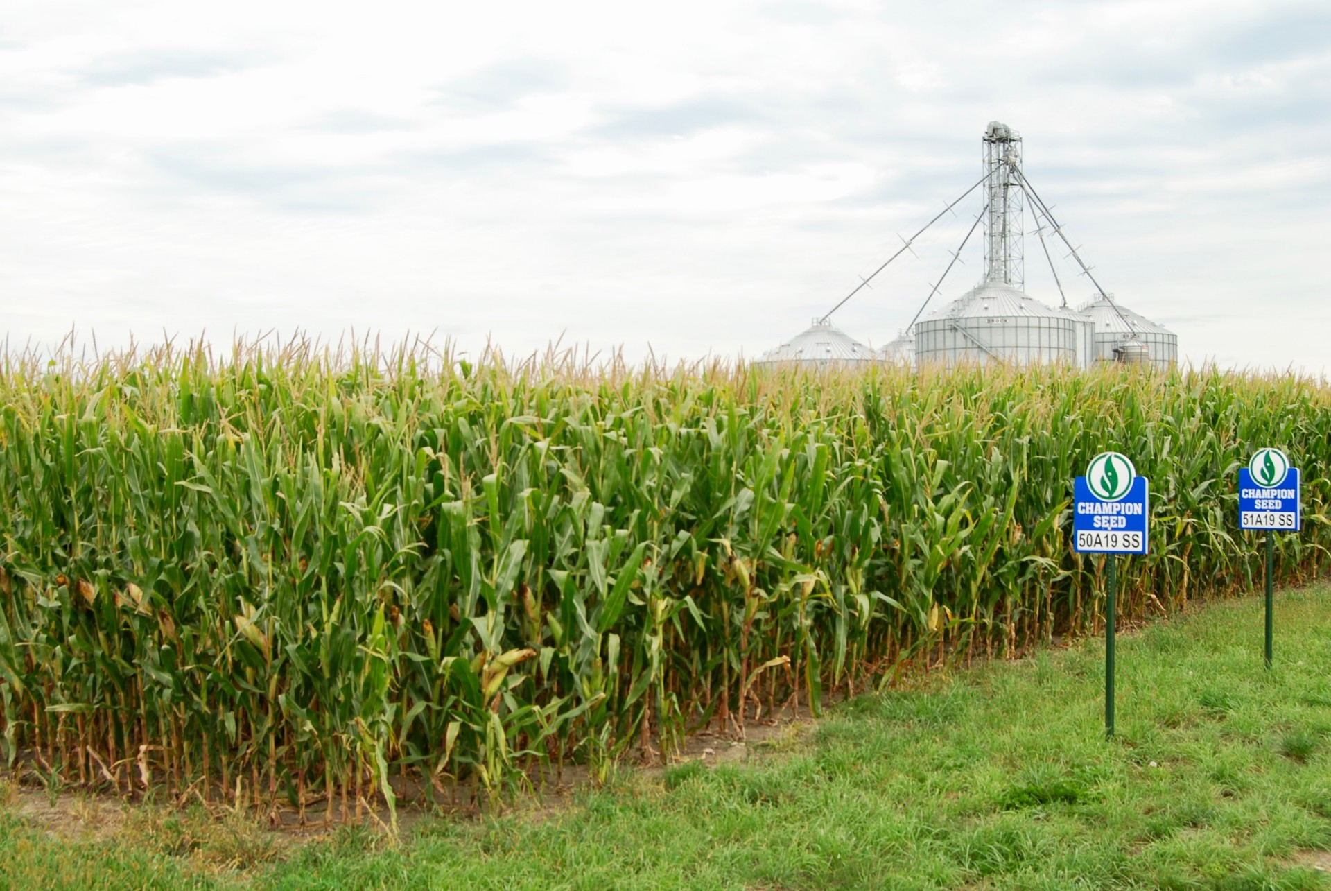 Corn field with Champion Seed trait signs